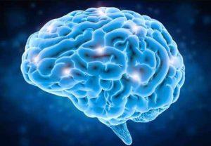 fakta unik tentang otak manusia