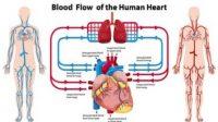 Manfaat puasa untuk membersihkan pembuluh darah