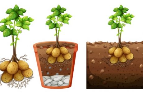 jenis perkembangbiakan vegetatif alami pada tumbuhan